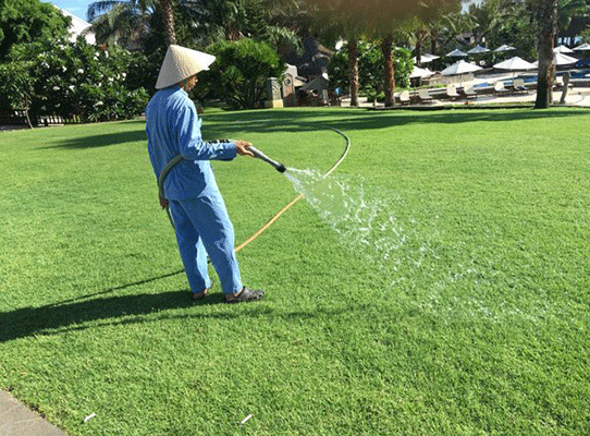 Chăm sóc cỏ