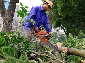 Dịch vụ cưa cây