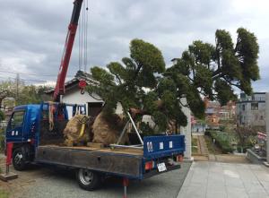 Dịch vụ di dời cây