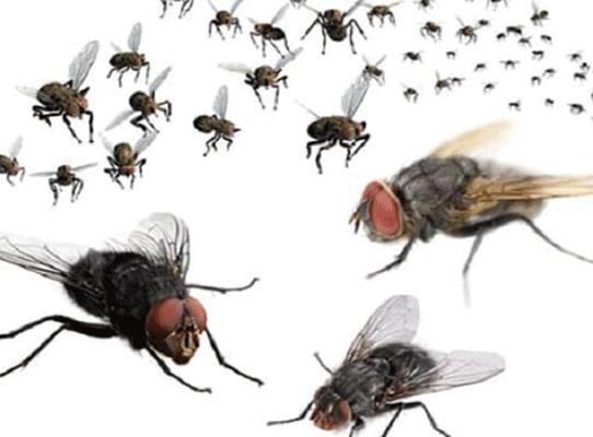 Phun thuốc diệt ruồi